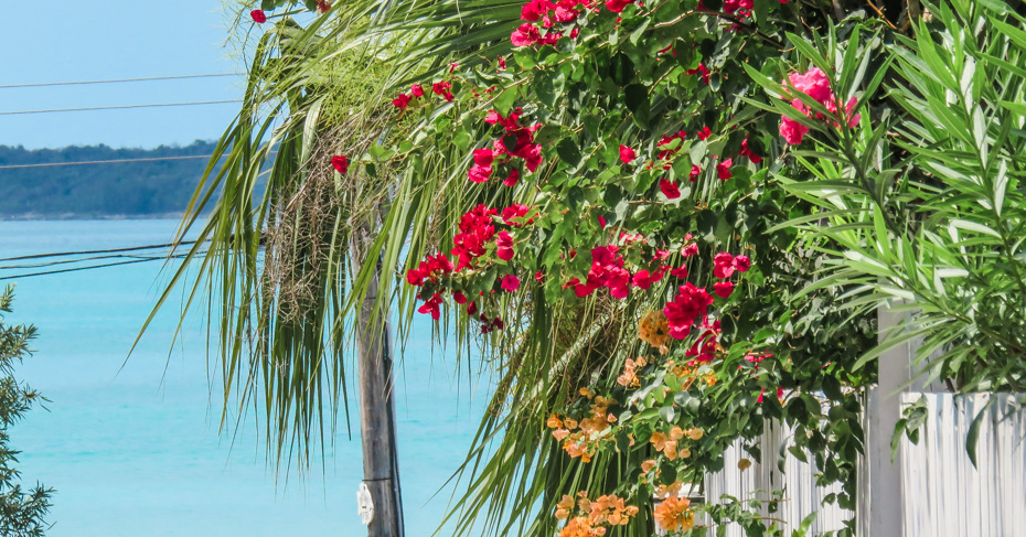 Flowers bloom in Dunmore Town on Harbour Island Bahamas in North Eleuthera. Flights to North Eleuthera depart from Florida with Bahamas Air Tours.