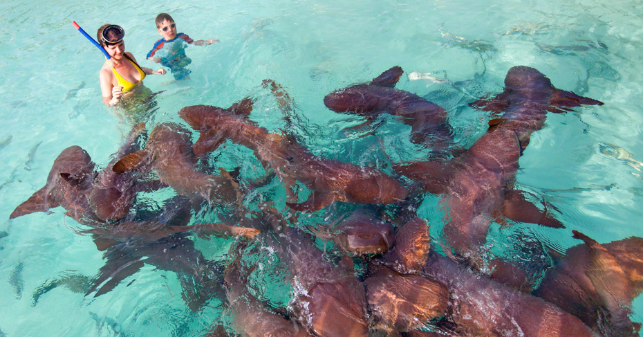 Swim with Nurse Sharks at Compass Cay, a short boat ride from Staniel Cay on our unique one day trip from florida to Bahamas. Our private flights to bahamas allow you to visit Staniel Cay in the Exuma Cays. Enquire with Bahamas Air Tours about our private bahamas charter flights. Day trips to Bahamas from Florida.