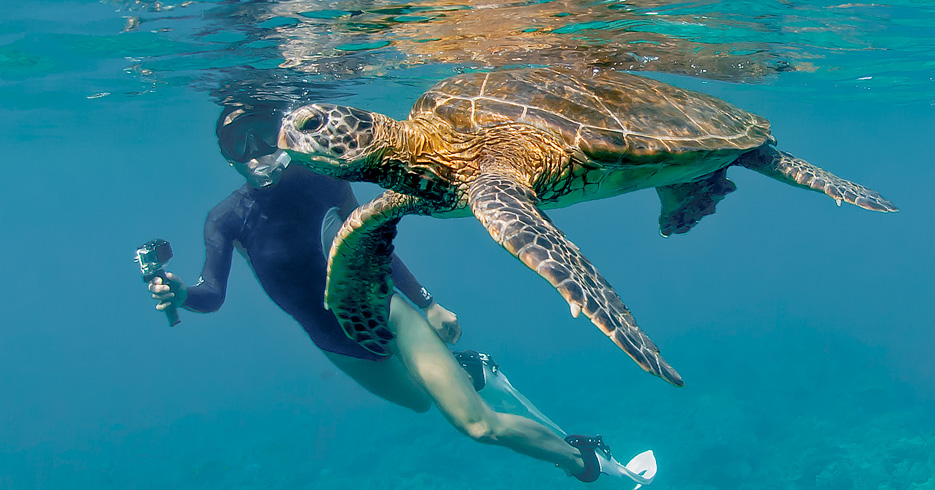 One Day Cruise to Bahamas From Miami swimming with turtles on a Boat Excursion with Bahamas Air Tours. Take a Day Trip to Bahamas from Miami by Plane.