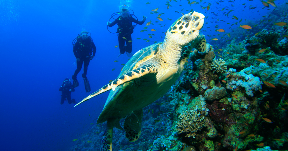 Best Scuba Diving Caribbean in the Bahamas. Explore the best diving bahamas in our guide to Bahamas Scuba Diving