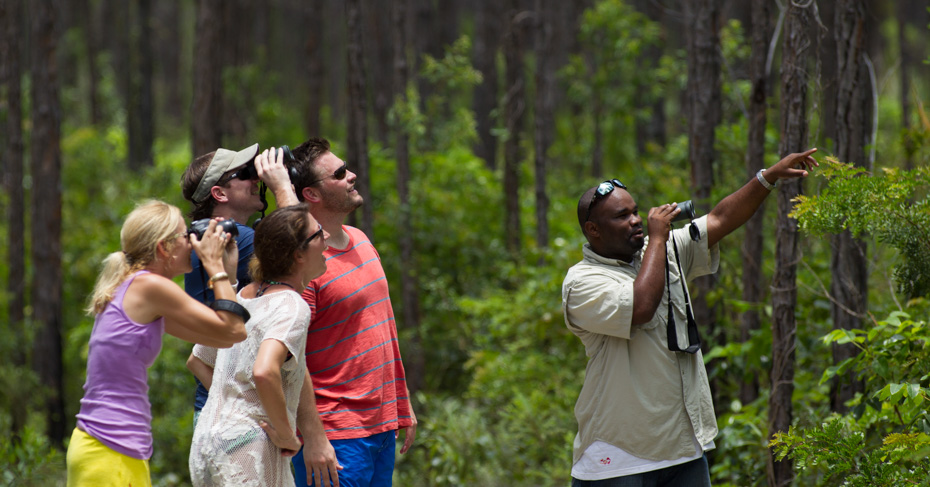 Birdwatching Bahamas tour to Andros, Abacos and Grand Bahama. Discover the best Bahamas hikes through the national parks