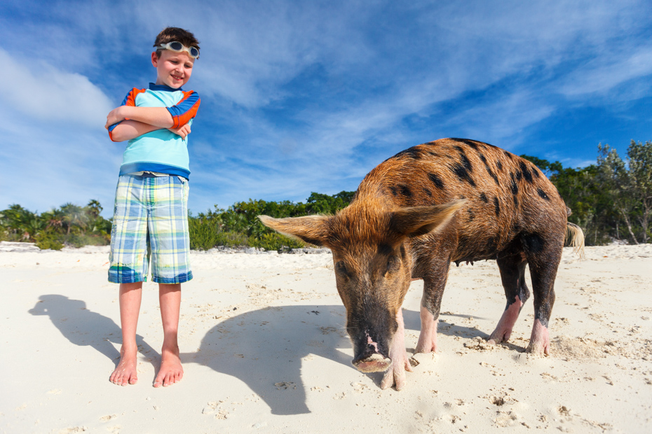 Staniel Cay Pigs Bahamas on Pig Beach, Big Major Cay. Take a Day Trip to Bahamas with Bahamas Air Tours from Florida.