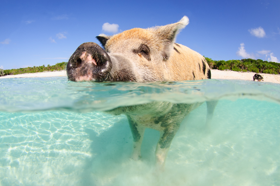 Things to do in Exuma Pigs on a Bahamas Day Trip with Bahamas air Tours. Private air charter flights from Florida to Staniel Cay for the ultimate Day Trip to Bahamas.