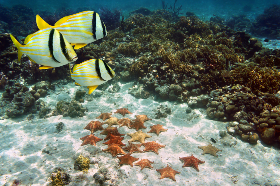 Bahamas fish and a group of Cushion starfish on the ocean floor, Atlantic, Bahamas islands with Bahamas Air Tours.