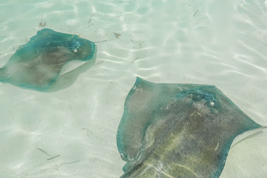 Bahamas Tour Abacos Beautiful Abaco Island, Bahamas in the summertime with Sting Rays patrolling the coastline.