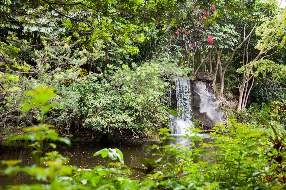 What to do in Freeport Bahamas Gardens of the Groves