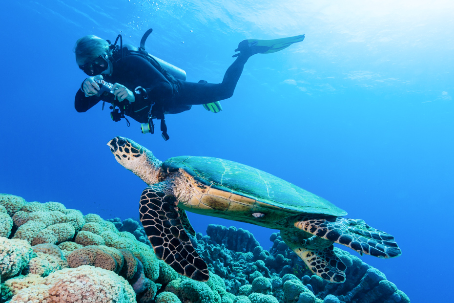 Wildlife in the Bahamas swimming wit the turtles at Farmers Cay in the Exumas and Green Turtle Cay in the Abacos Islands. Fly from Florida to Bahamas with Bahamas Air Tours.