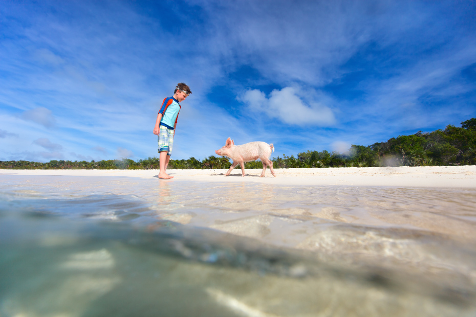 Boy with little piglet at Exuma beach, Bahamas. Check out this Atlantis Water Park at Atlantis Aquaventure with an Atlantis Bahamas Day Pass. This Atlantis Day Pass will grant access to the entire Atlantis Bahamas Water Park. Bahamas Air Tours gives you your guide to Day Trips to Bahamas by flights to Bahamas aboard Bahamas Air Charters to Swimming Pigs tours and the Exuma pigs on Pig Island at Pig Beach. Join one of our Staniel Cay Day trips on our Nassau to Staniel Cay day tour or opt for the Staniel Cay Day trips by the way of Bahamas Day Trips by plane. Trips to Bahamas to see pigs in Bahamas. Miami to Bahamas day trip is one of the top Florida attractions.