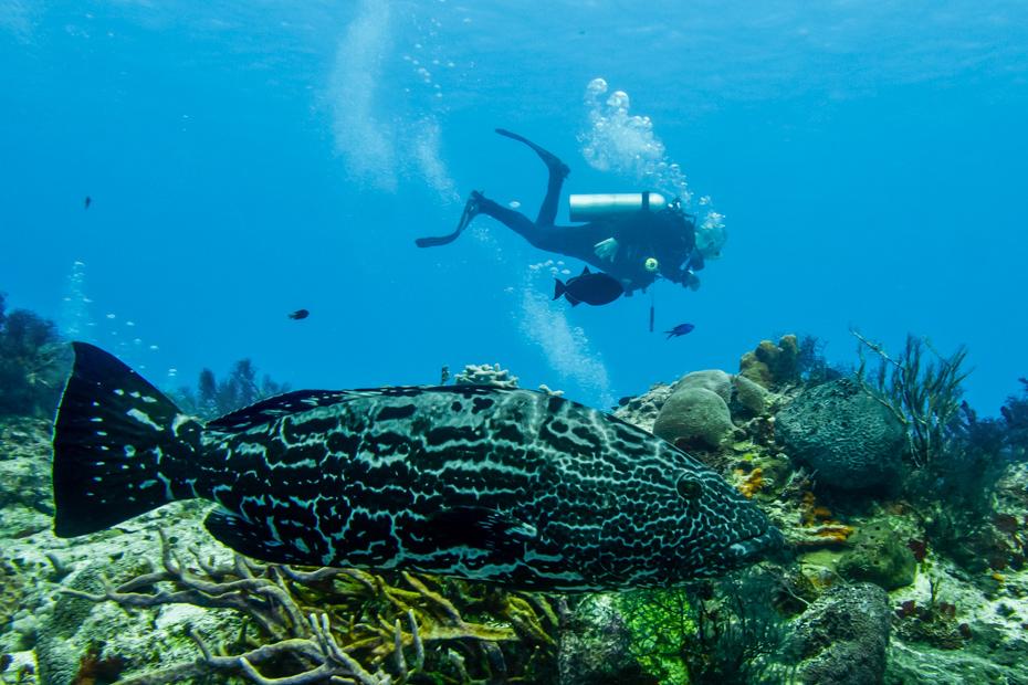 Nassau Scuba Diving Bahamas