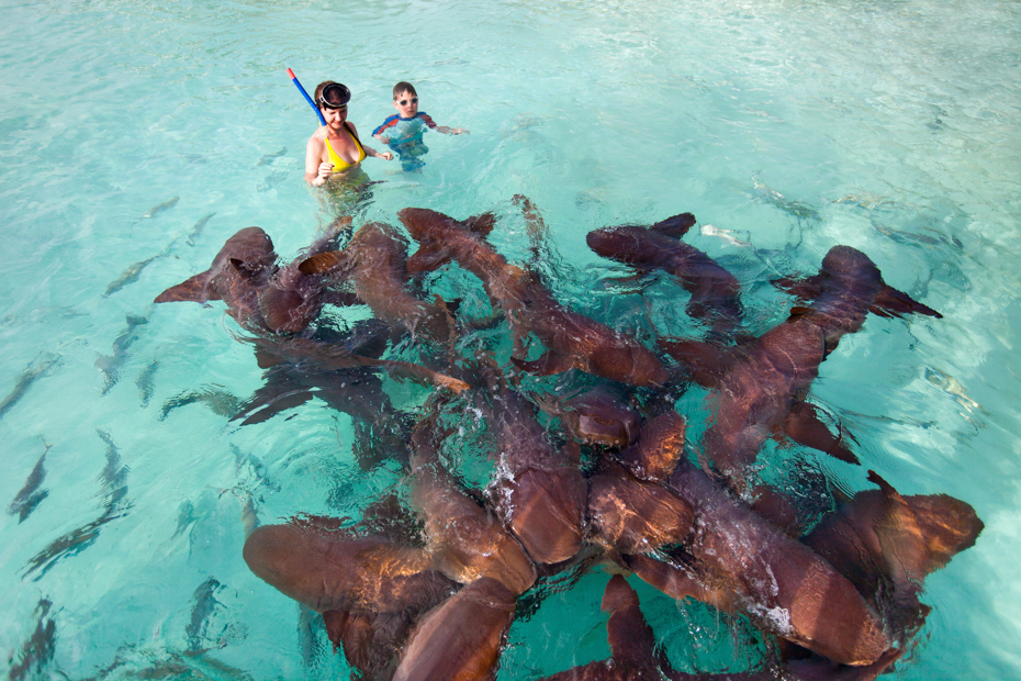 Mother and son swimming with nurse sharks. Join the Staniel Cay Tours.