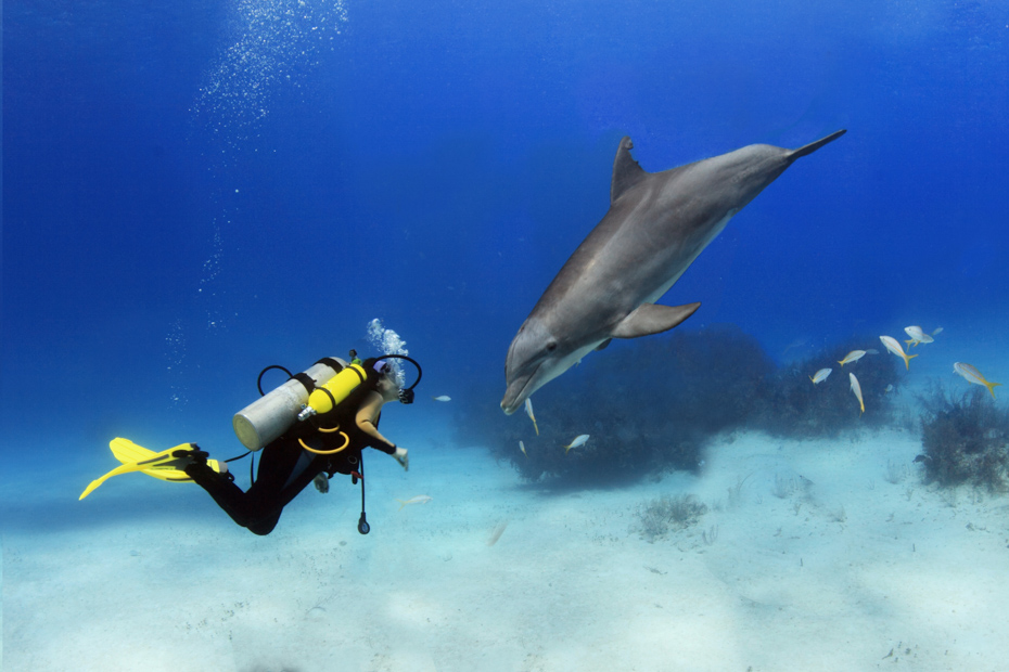A scuba diver plays with a dolphin on a Nassau excursions. All Bahamas excursions and Bahamas activities can be found in Nassau.