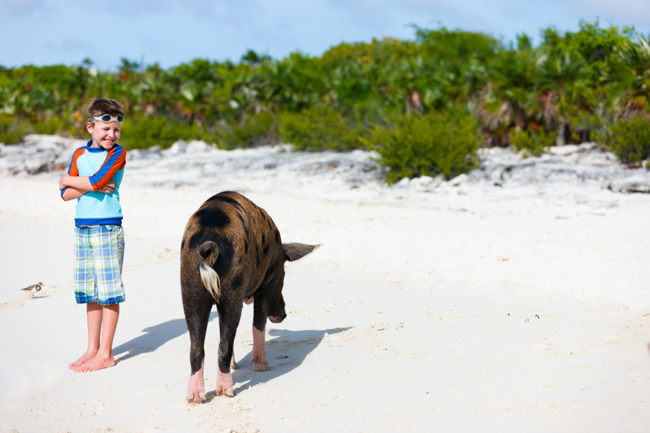 Exuma Pig on a Pig Beach Bahamas tour around Big Major Cay (Pig Island).
