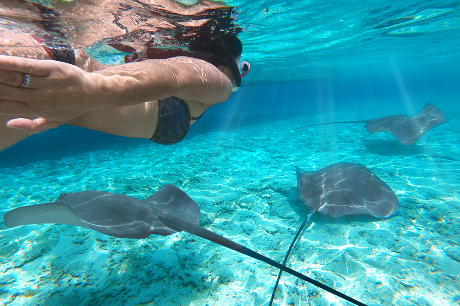 Snorkel with exotic marine life in the Bahamas. There are places to visit in Bahamas many have never heard of such as Big Major Cay (Pig Island) on a day trip to Staniel Cay.