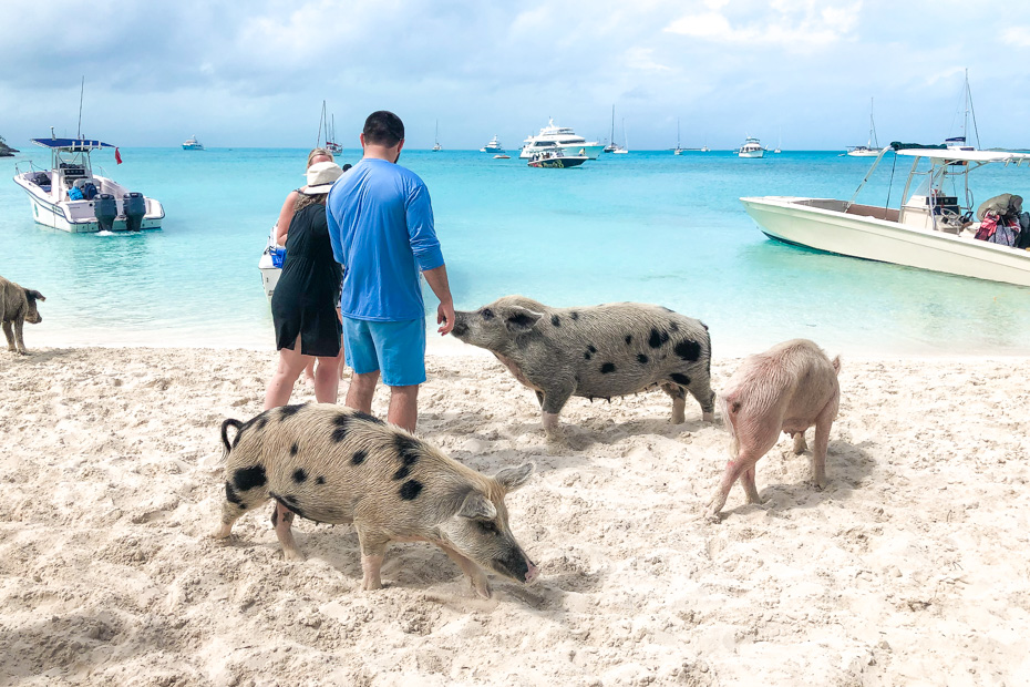 Exuma Pig Beach is a unique island in Bahamas to visit. Home to the Swimming Pigs Exuma, you can visit here on a Nassau to Exuma Day Trip by plane. There are many Exuma Excursions and ways on how to get to exuma.