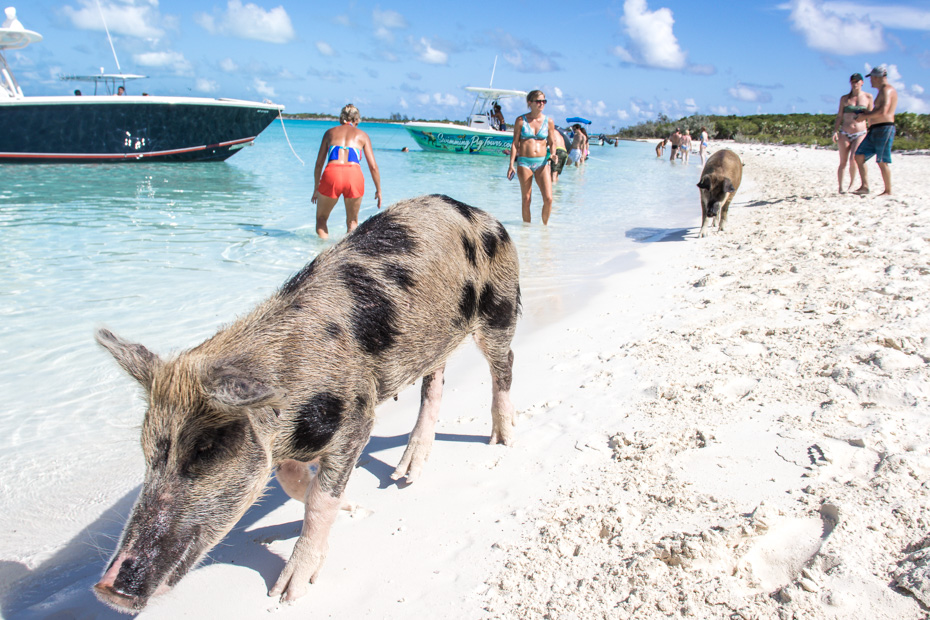 How to Get to Pig Beach Bahamas in Exuma