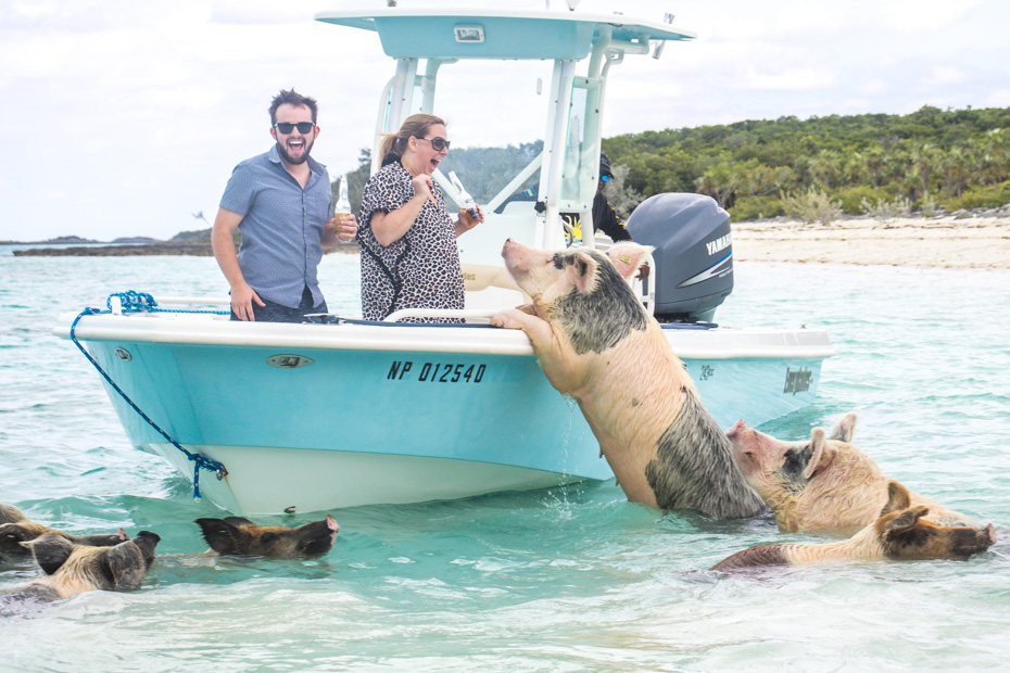 Swimming Pigs Island is home to the Swim with Pigs Excursion from Miami and Nassau. Bahamas Air Tours offers many tours to Pig Beach Bahamas with flights from Nassau to Staniel Cay.