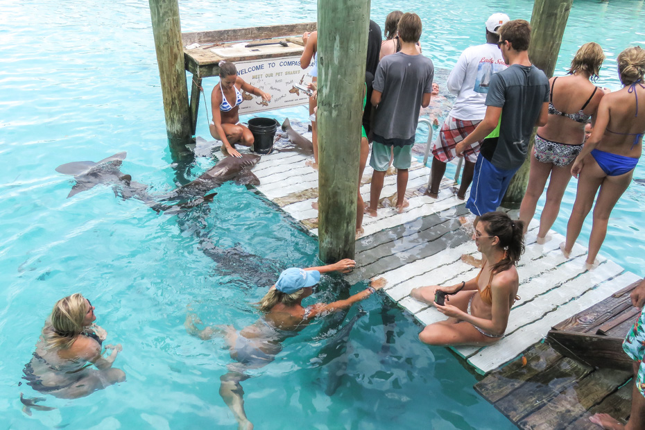 Swimming with Nurse Sharks at Compass Cay Marina Bahamas. Compass Cay is a small island in the Exuma Cays. Compass Cay Marina is home of the swimming with Sharks bahamas day trip with Bahamas Air Tours from Staniel Cay.