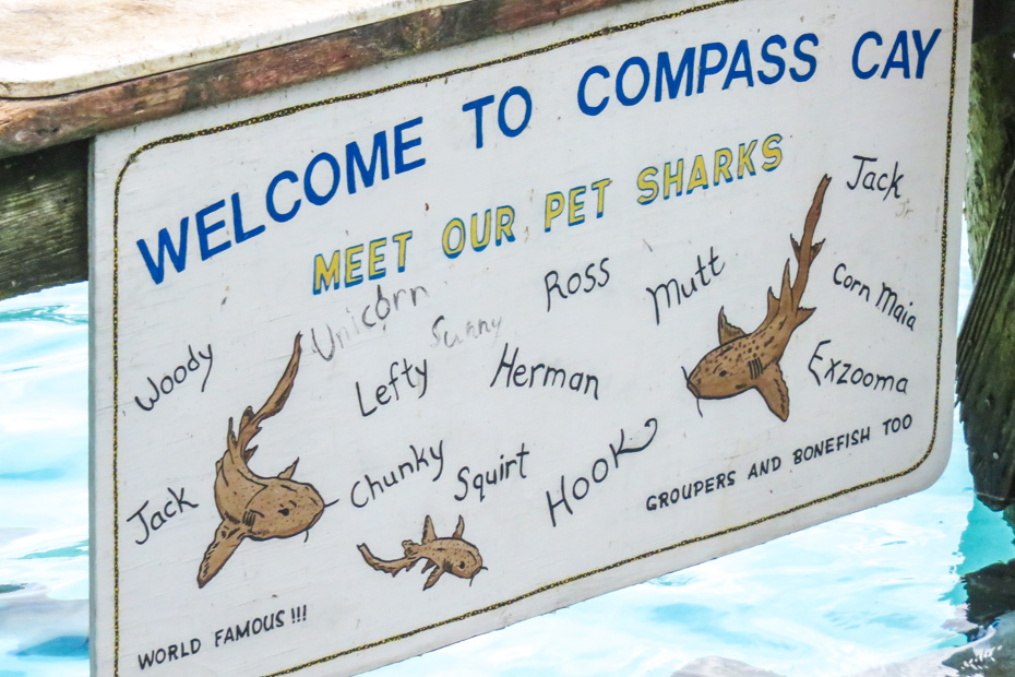 How to go Swimming with the Exuma Sharks in the Bahamas