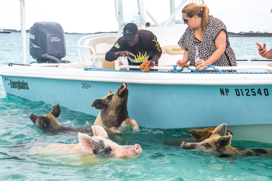 Nassau Bahamas Swim with Pigs excursion is the best way to visit Exuma and the famous Swimming Pigs Bahamas. Pig Island from Nassau is easy to reach. Take a Nassau to Pig Beach Excursion with Bahamas Air Tours