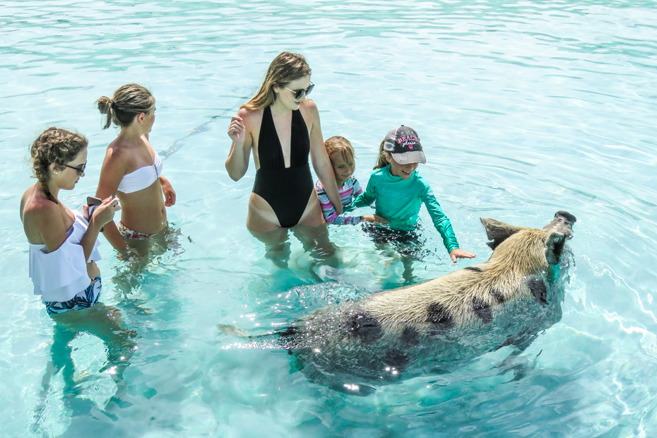 Pig Beach Bahamas Tour is an easy way to visit the swimming Pigs in Exuma. Take a Pig Beach Nassau to Exuma Day Trip by plane with Bahamas Air Tours and enjoy visiting the famous Exuma Pigs on a Pig Beach Bahamas Tour and Excursion.
