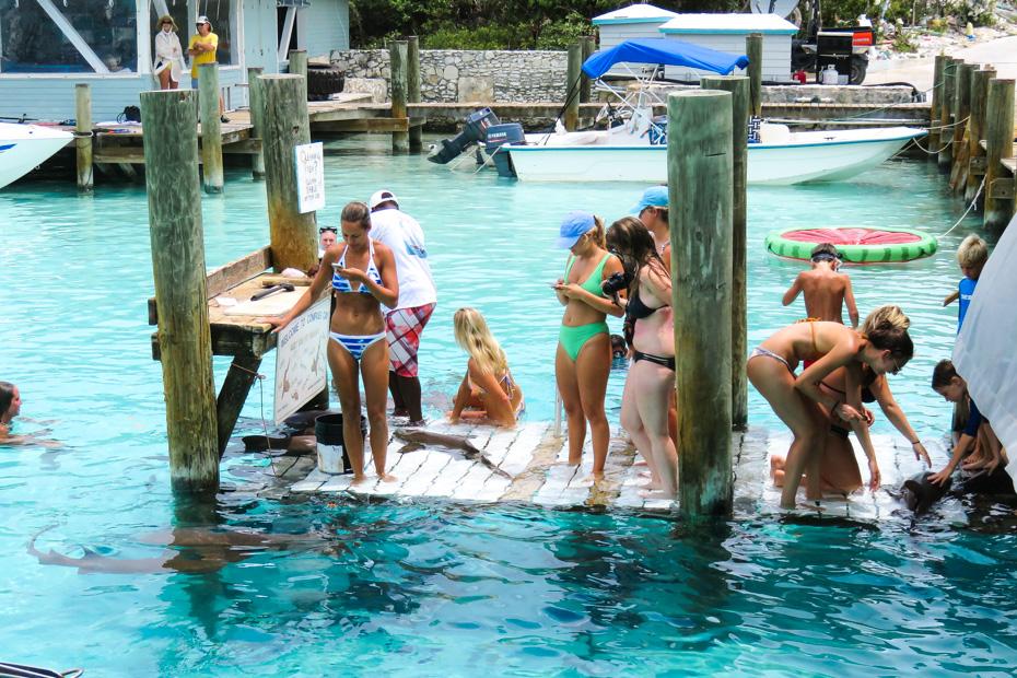 Swimming with Sharks Bahamas at Compass Cay Marina, home to the Exuma Sharks, and experience of swimming with Nurse Sharks in the Bahamas Exuma Cays.