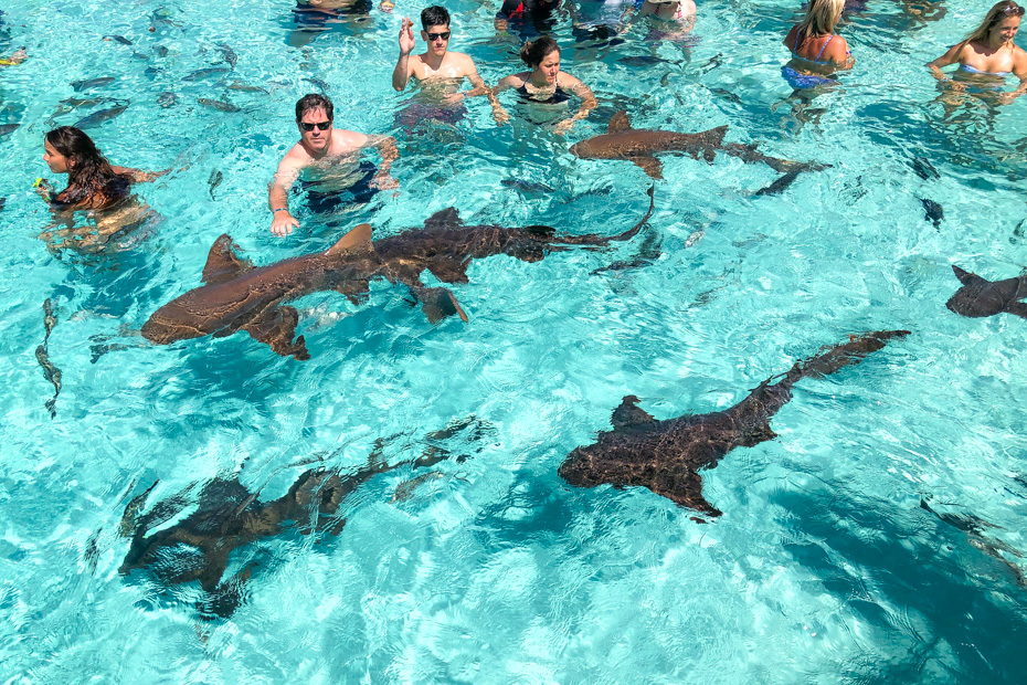 Experience the Best of the Bahamas on a Exuma Day Trip