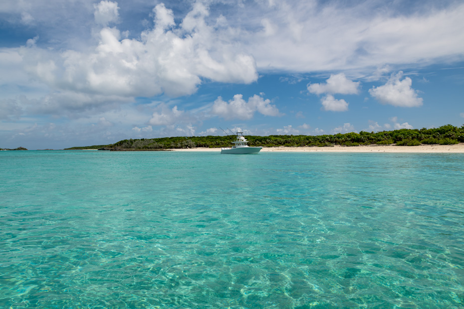 things to do in the bahamas pig beach is the best place to go in the Bahamas, home to the famous Bahamas Swimming Pigs that live on Pig Island. Fly from Nassau to Pigs Beach with Bahamas Air Tours.