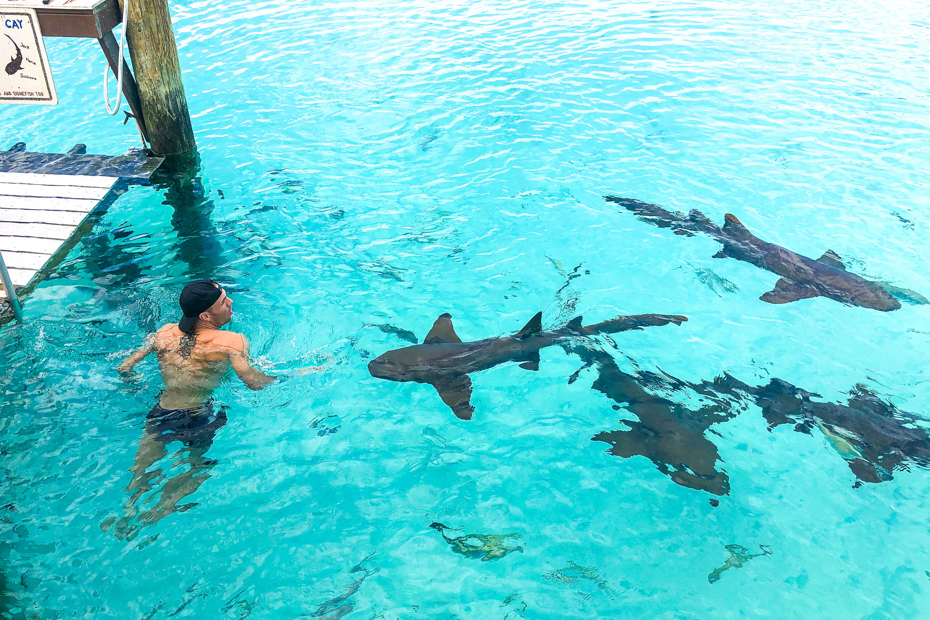 Swim with sharks at Compass Cay! Your Exuma tours from Nassau highlights are out of this world. A day cruise to Bahamas is for everyone!