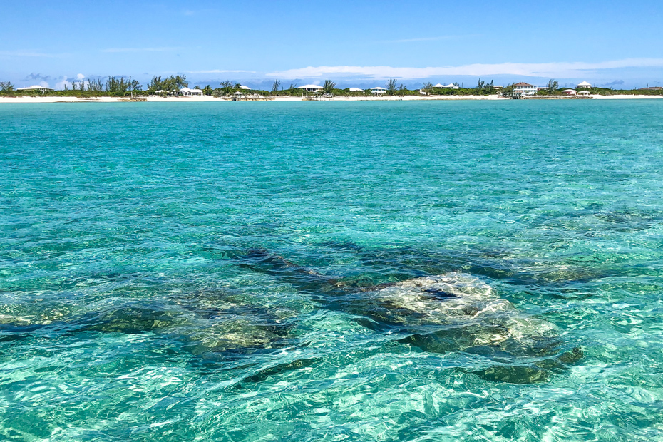 The crystal clear waters of a Bahamas day trip from Nassau. Dive in on a Bahamas Air Tours day trip to Bahamas with the Exuma pigs.