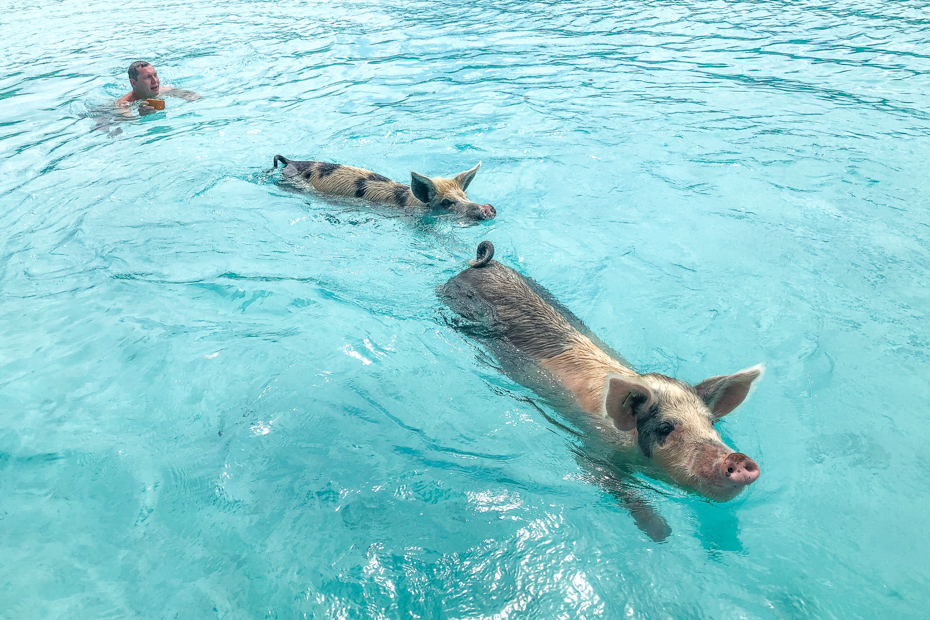 Where is Pig Island? That's a question we get all the time. Read on to find out! Let's go swimming with the pigs in the Bahamas!
